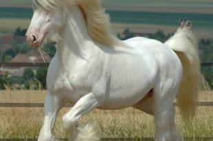 صوره اجمل حصان في العالم , صور احلى الخيول فى العالم
