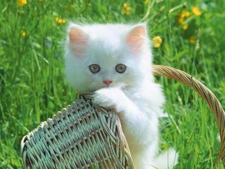 صور خلفيات قطط , اجمل صور القطط
