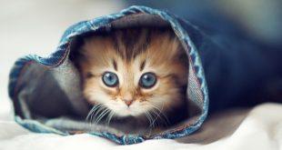 صورة خلفيات قطط , اجمل صور القطط