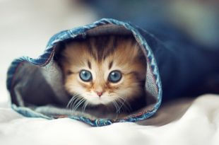 صوره خلفيات قطط , اجمل صور القطط