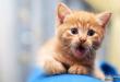 بالصور اجمل الصور للقطط في العالم , خلفيات صور قطط 4041 1 110x75