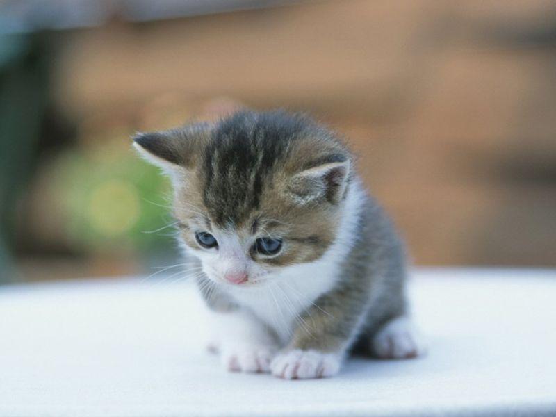 بالصور اجمل الصور للقطط في العالم , خلفيات صور قطط 4041 1