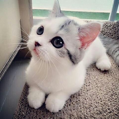 بالصور اجمل الصور للقطط في العالم , خلفيات صور قطط 4041 2
