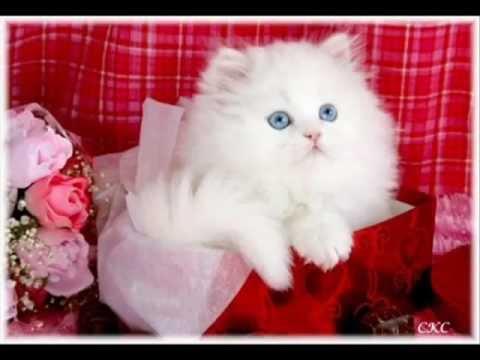 بالصور اجمل الصور للقطط في العالم , خلفيات صور قطط 4041 3