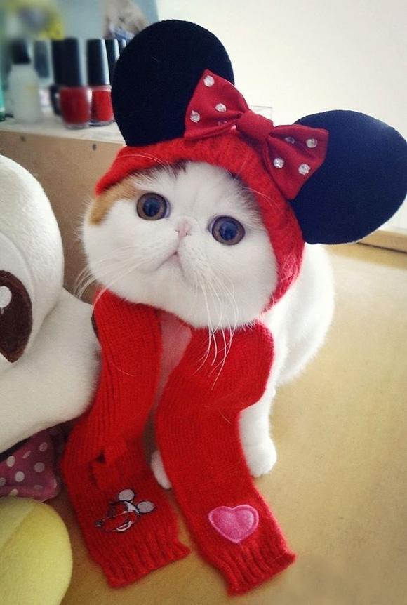 بالصور اجمل الصور للقطط في العالم , خلفيات صور قطط 4041 4