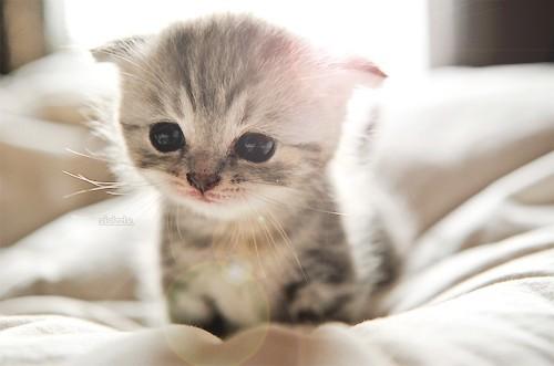 بالصور اجمل الصور للقطط في العالم , خلفيات صور قطط 4041 6