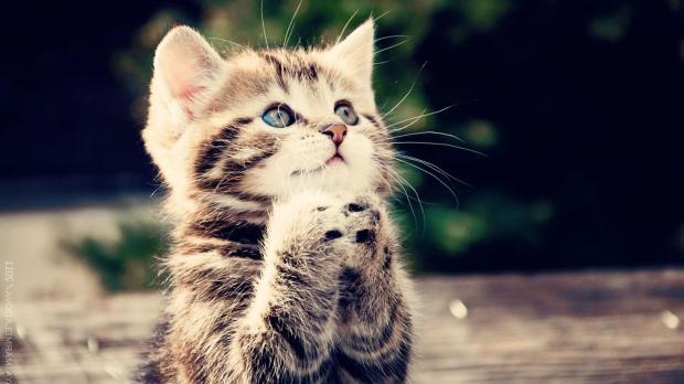 بالصور اجمل الصور للقطط في العالم , خلفيات صور قطط 4041 7