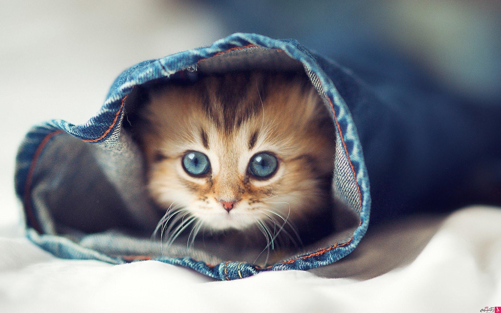 بالصور اجمل الصور للقطط في العالم , خلفيات صور قطط 4041 8