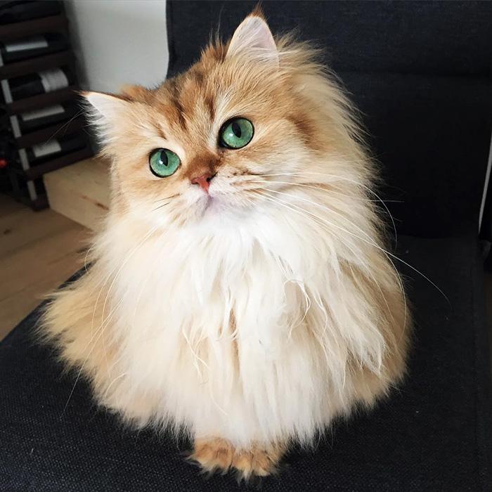 بالصور اجمل الصور للقطط في العالم , خلفيات صور قطط 4041 9