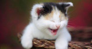 صورة صور قطط مضحكة , صور لاجمل قطط فى وضعيات طريفة