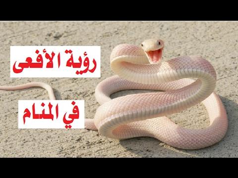 بالصور الافعى في المنام , روئيه الحيه فى المنام 77 1
