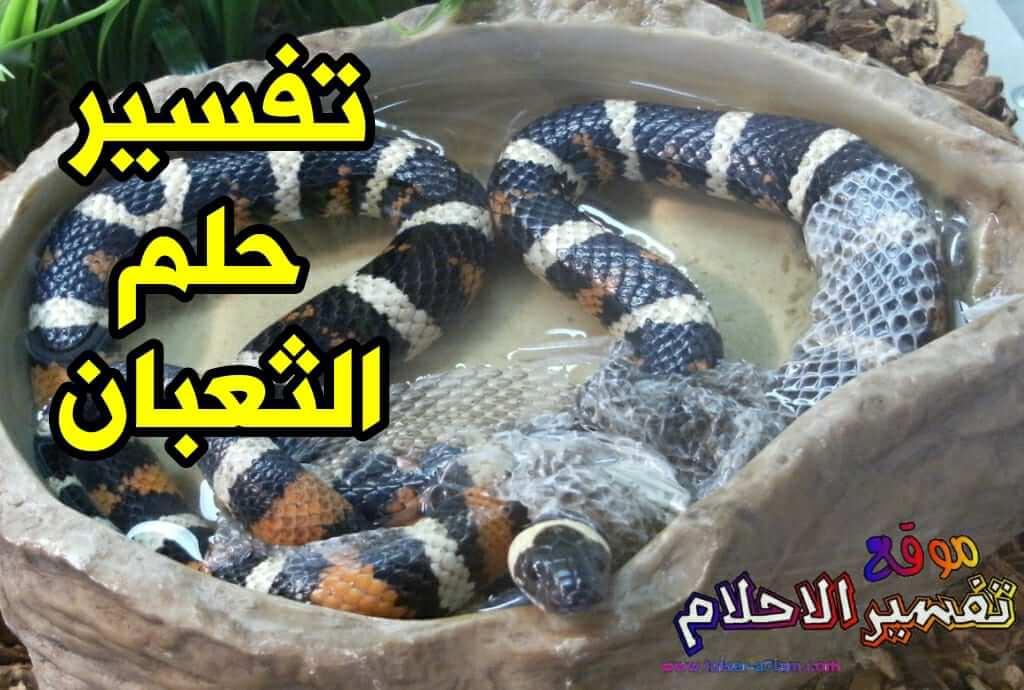 بالصور الافعى في المنام , روئيه الحيه فى المنام 77 2