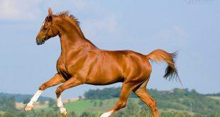 صورة صور خيل , خلفيات حديثة لاجمل الخيول فى العالم
