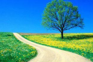 بالصور صور من الطبيعة , مناظر طبيعية ساحرة وخلابة 6263 5 1 310x205