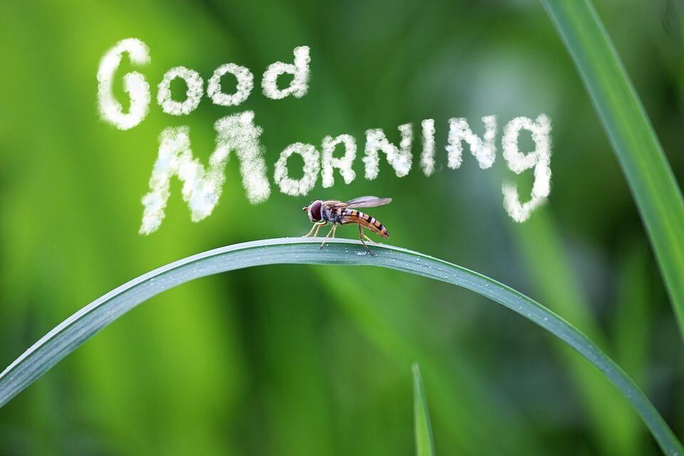 بالصور احلى صباح الخير , صور ومسجات تحية الصباح 6665 19