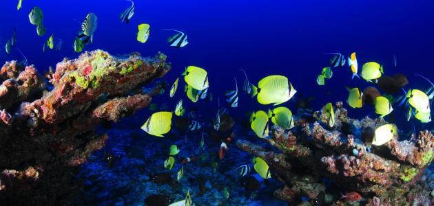 صور عجائب البحر , اسرار عالم البحار وما يخفية