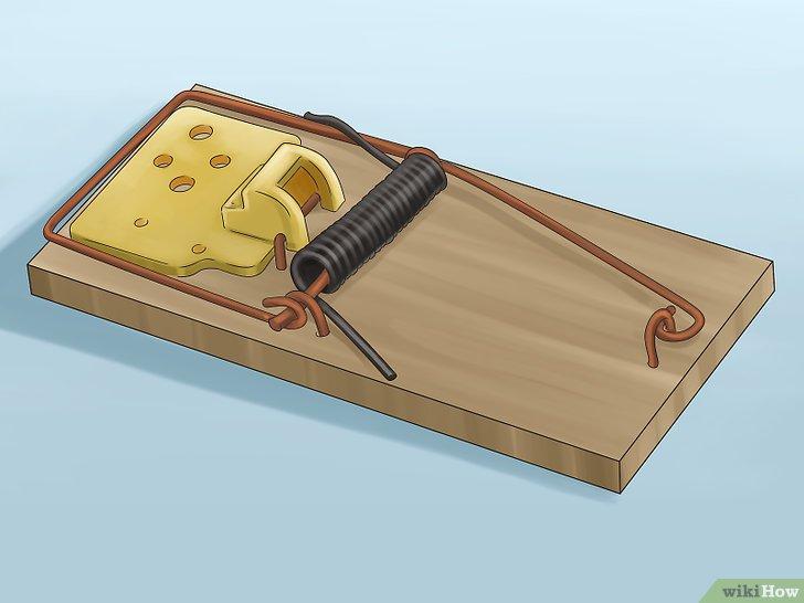 بالصور افضل طريقة للقضاء على الفئران , افضل طريقة للقضاء على الفئران بدون اى ضرر 11451 1
