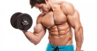 بالصور فوائد الكرياتين للعضلات , فوائد الكرياتين في بناء العضلات 11514 2 310x165