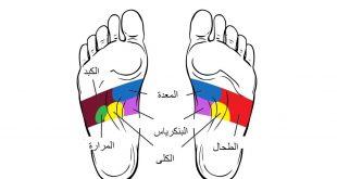 صور اجزاء الجسم في القدم , تعرف وتعلم اجزاء الجسم في القدم