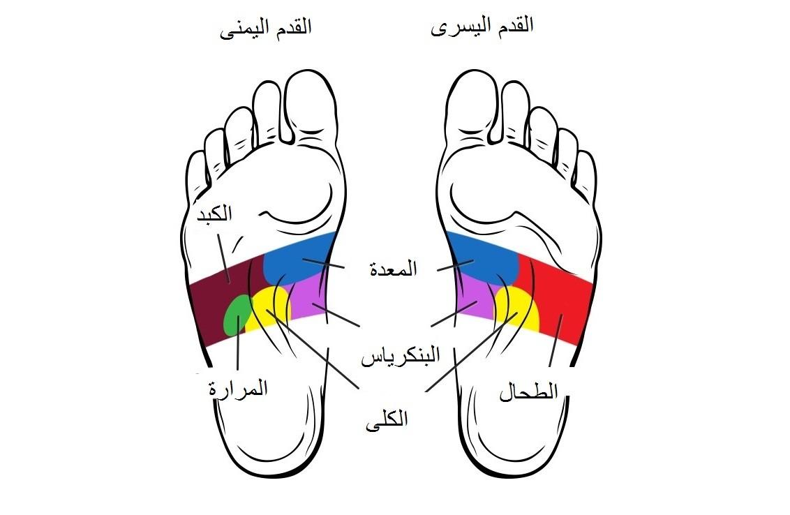 صورة اجزاء الجسم في القدم , تعرف وتعلم اجزاء الجسم في القدم