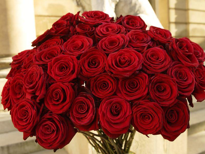 بالصور اجمل الورود الرومانسية , احلى وارق الورود الرومانسية 11681 6