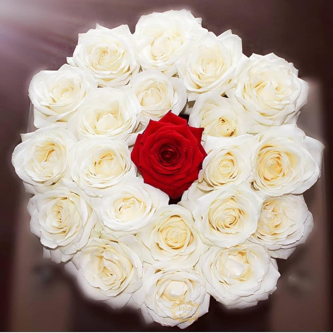 بالصور اجمل الورود الرومانسية , احلى وارق الورود الرومانسية 11681 8