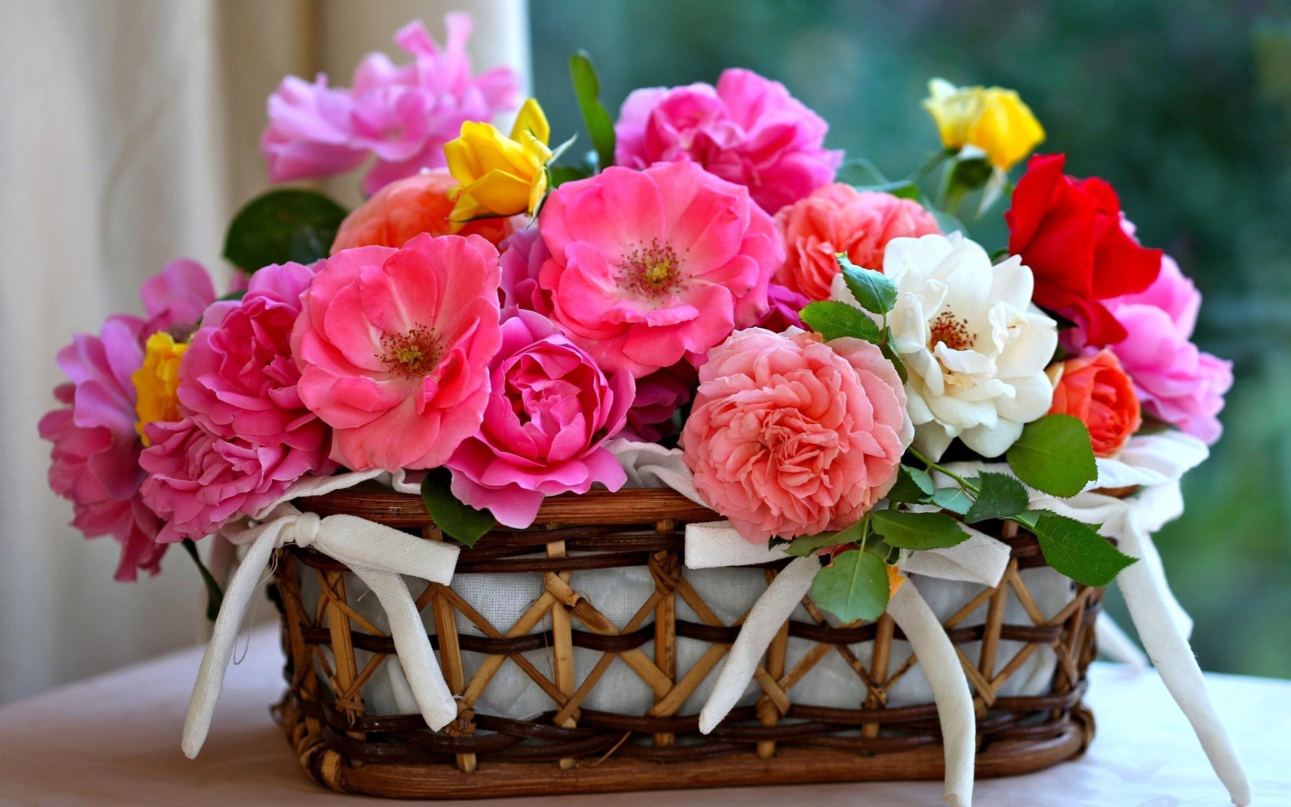 بالصور اجمل الورود الرومانسية , احلى وارق الورود الرومانسية 11681 9