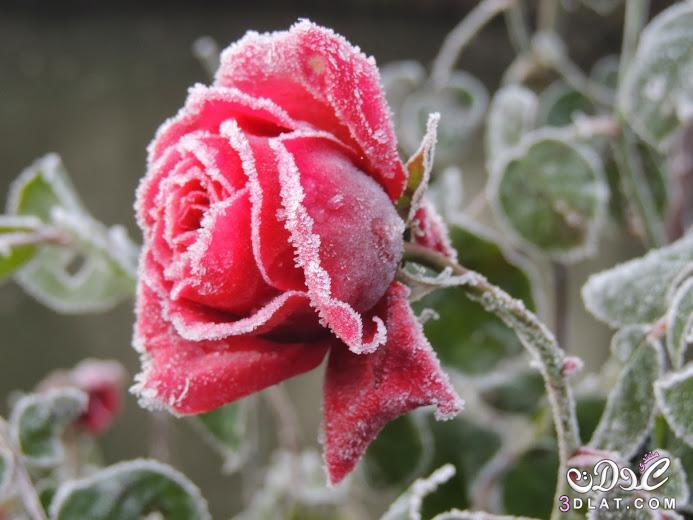 صورة صور جميلة وحلوة , اجمل واحلى صور حلوة 11710 1