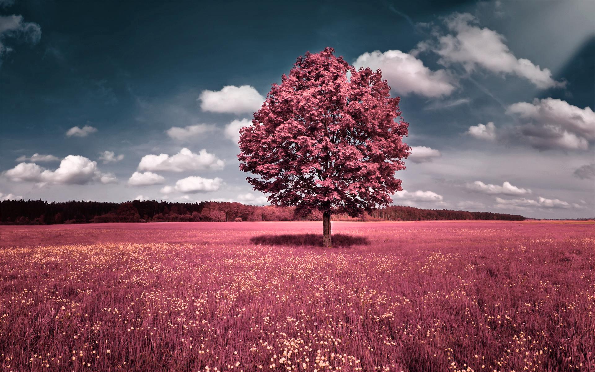 بالصور بحث عن المناظر الطبيعية , اجمل واحلى مناظر طبيعيه في العالم 11799 9