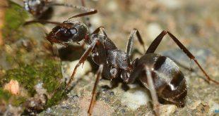 صورة تفسير حلم النمل للحامل , معرفة وتفسير حلم النمل للحامل