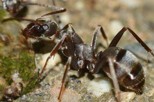 صور تفسير حلم النمل للحامل , معرفة وتفسير حلم النمل للحامل