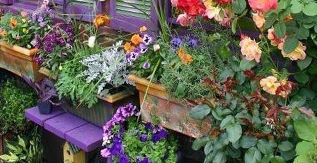 بالصور تصميمات حدائق منزلية , افكار جديدة لحدائق منزلية 12489 12