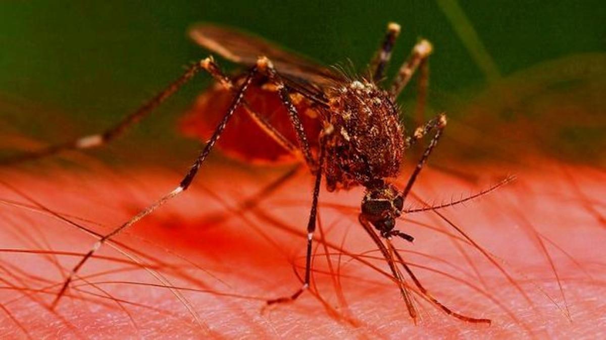 بالصور اخطر انواع الحشرات , انواع حشرات تسبب الموت 11676 1