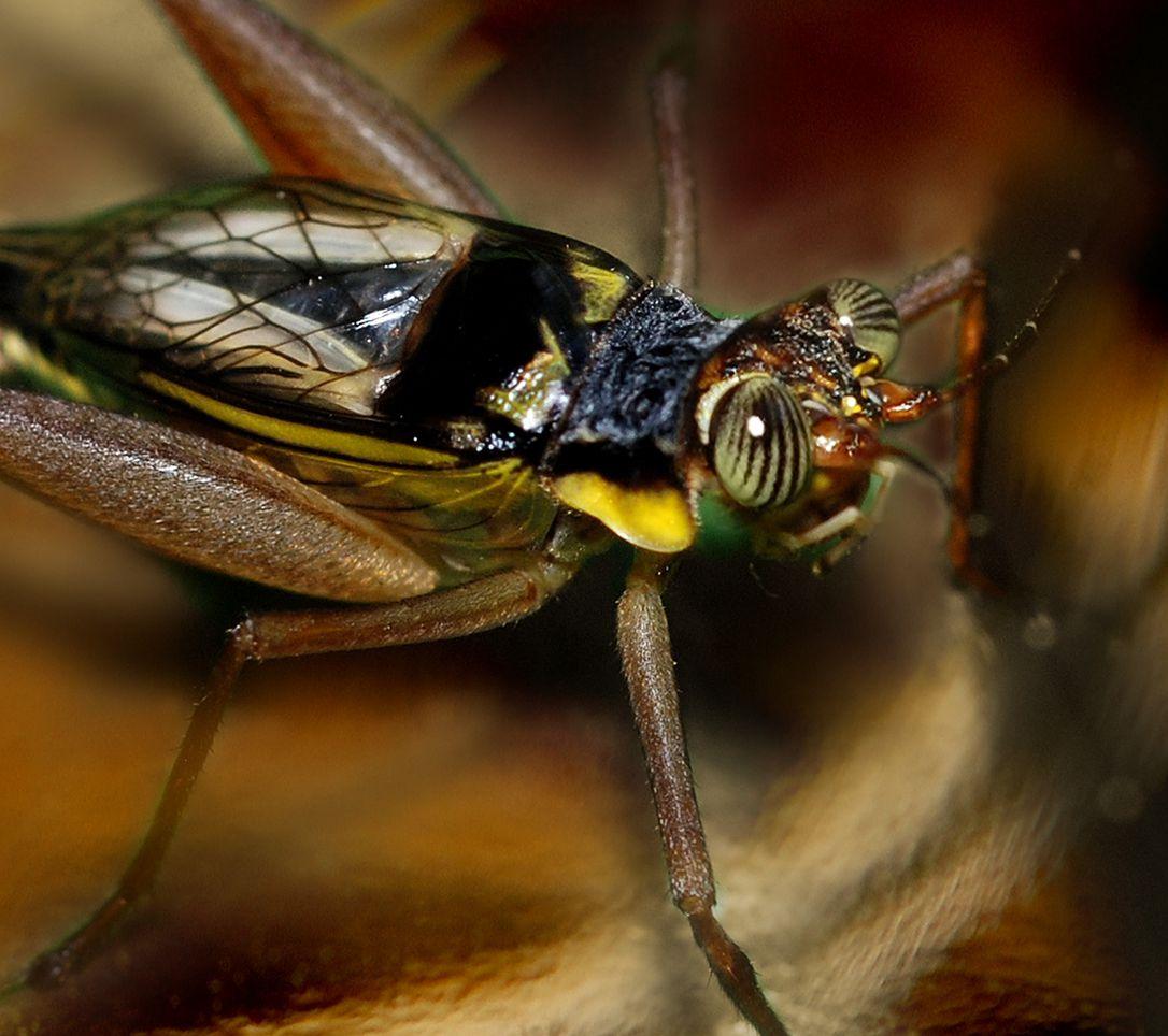 بالصور اخطر انواع الحشرات , انواع حشرات تسبب الموت 11676 11