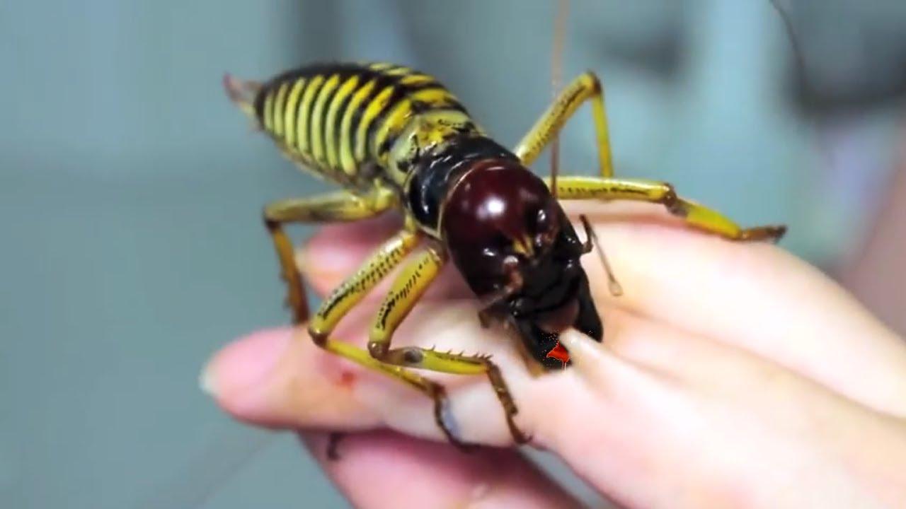 بالصور اخطر انواع الحشرات , انواع حشرات تسبب الموت 11676 2