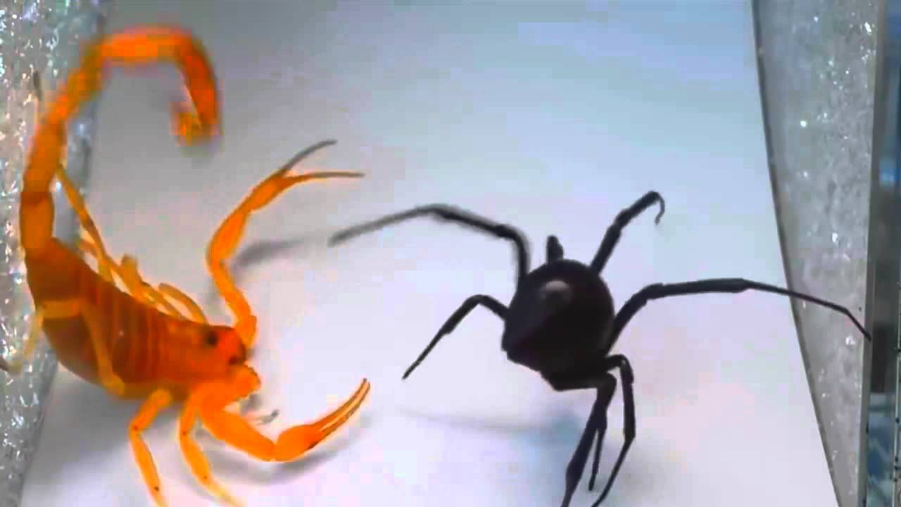 بالصور اخطر انواع الحشرات , انواع حشرات تسبب الموت 11676 4