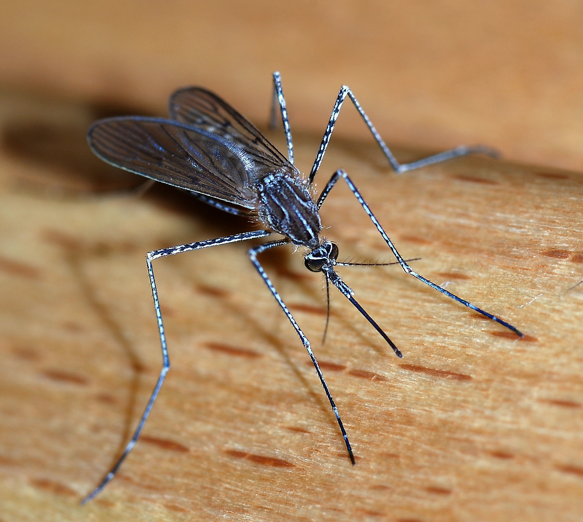 بالصور اخطر انواع الحشرات , انواع حشرات تسبب الموت 11676 7