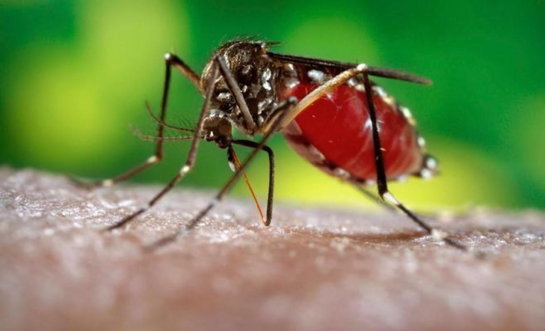 بالصور اخطر انواع الحشرات , انواع حشرات تسبب الموت 11676 9