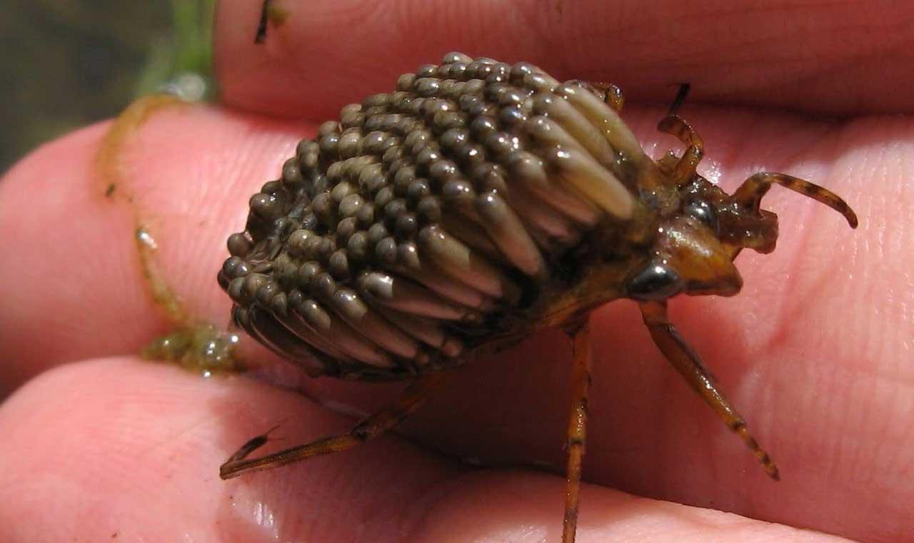 بالصور اخطر انواع الحشرات , انواع حشرات تسبب الموت 11676