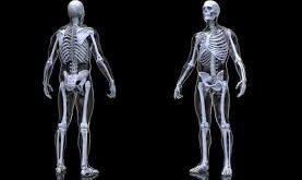صورة صور جسم الانسان , اعضاء جسم الانسان