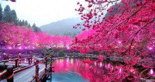 بالصور اجمل الصور الطبيعية في العالم , صور مناظر طبيعيه و لا اروع 3340 12 310x165