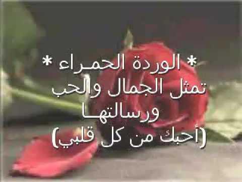 بالصور خواطر عن الورد , الورد و اهميته فى حياتنا 4190 4