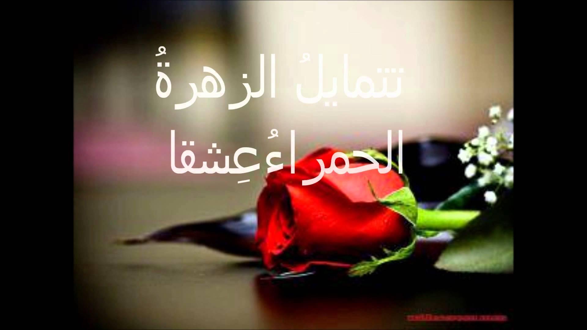 بالصور خواطر عن الورد , الورد و اهميته فى حياتنا 4190 6