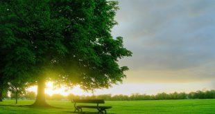 صور اجمل صور الصباح , صور صباحات مشرقه