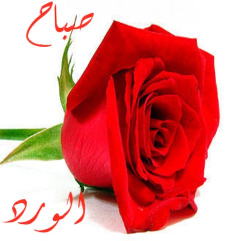صورة بطاقات مساء الورد , اروع رسايل مساء الورد 5308