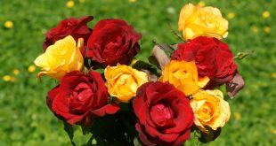 صور صور ورد حلوه , اجمل اشكال الورد