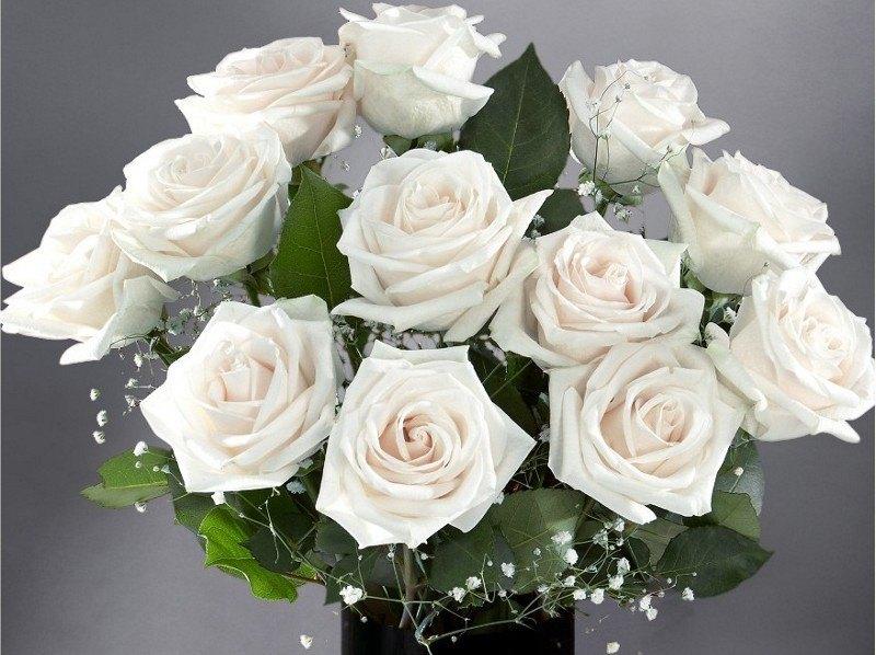 كلام حلو عن الورد الابيض Aiqtabas Blog
