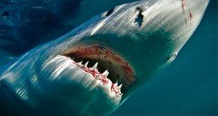 صور اكبر حيوان في العالم , اضخم حيوان فى الدنيا