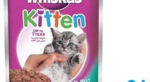 صورة كيفية تربية القطط , طريقه تربيه القطط فى المنزل