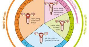 صور الايام المناسبة للحمل بعد الدورة الشهرية , ايام التبويض بعد الدوره الشهريه